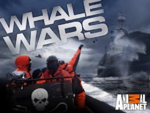 Whale Wars sur Animal Planet