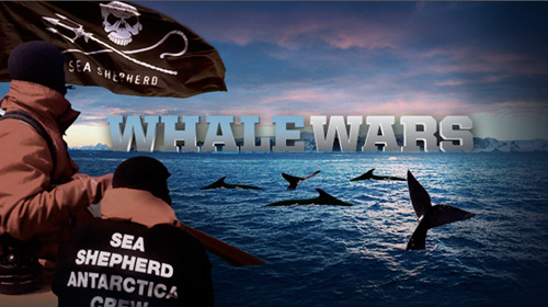 whale wars Animal Planet